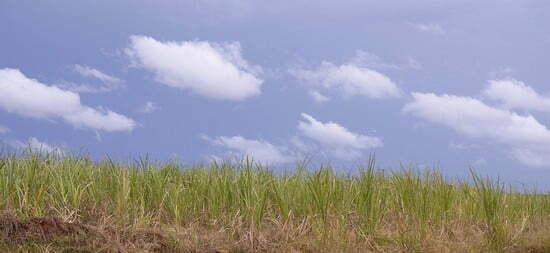 os engenhos de açúcar no brasil